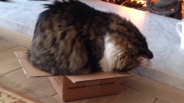 Featured-Cat-In-Box