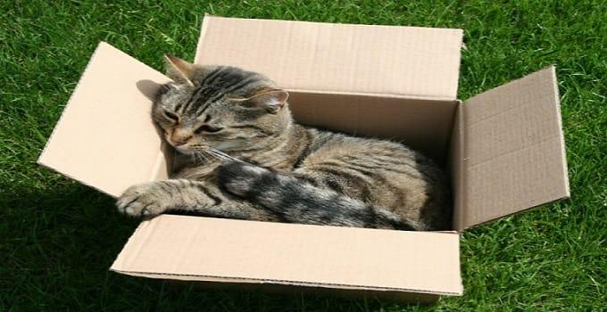 cat-in-a-box-min