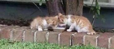 Featured-Blind-Kitten-Twins-FB