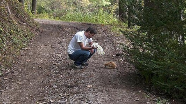 Featured-Man-Rescues-Cats-From-Woods
