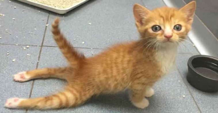 Featured-Paralyzed-Kitten-FB