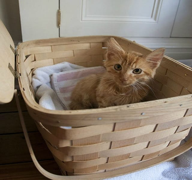 Man-Rescues-Cats-From-Woods-4
