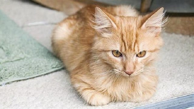 Man-Rescues-Cats-From-Woods-6