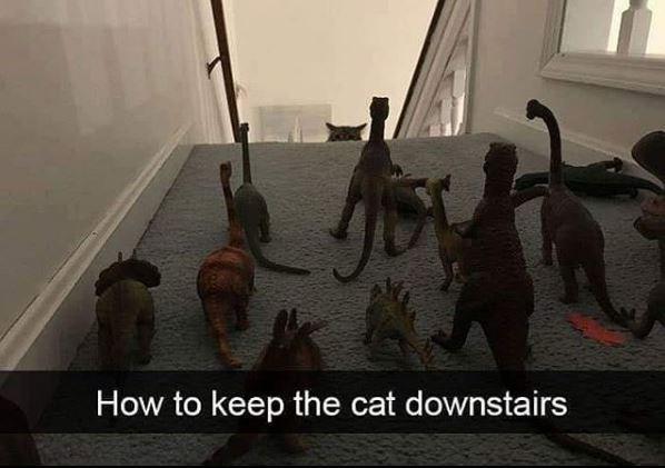 catsnaps7