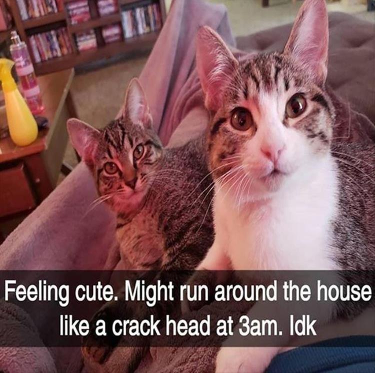catsnaps8
