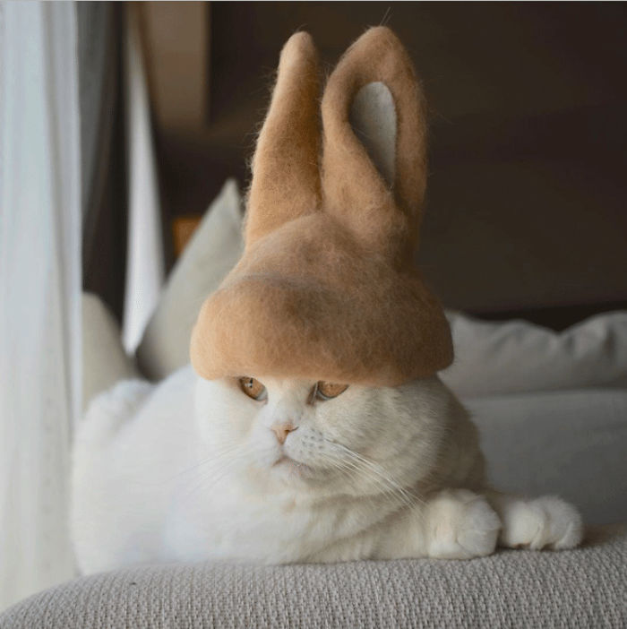 cat-fur-hat-11