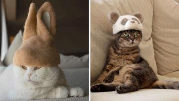 cat-fur-hat-Featured