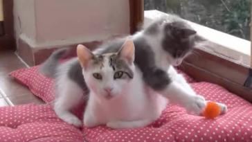 Featured-Overactive-Kittens